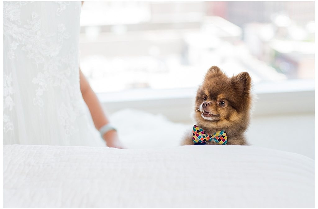 Fur Babies on your Wedding Day and 5 ideas on how to include them | AK Brides